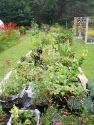 Achill Secret Garden